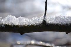 Árbol helado Imagenes de archivo