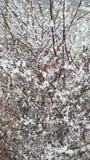 Árbol helado Imagen de archivo libre de regalías