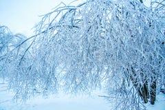 árbol helado del invierno Imagen de archivo libre de regalías