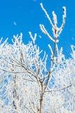 Árbol helado y nieve que cae Foto de archivo
