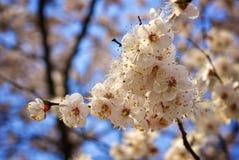 Árbol hermoso Foto de archivo libre de regalías