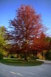 Árbol hermoso Imagen de archivo