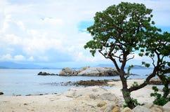 Árbol hermoso foto de archivo