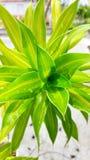 Árbol hermoso Fotos de archivo