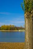 Árbol hermoso al lado de un lago Foto de archivo