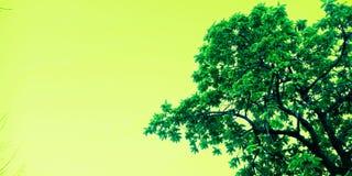 Árbol hermoso con la foto de la acción de la imagen del cielo fotos de archivo