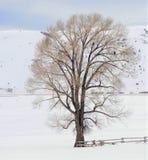 Árbol hermoso con tres Eagles calvo al lado de Miller Cabin en el refugio nacional de los alces, Jackson Hole, Wyoming Imagen de archivo libre de regalías