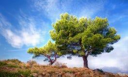 Árbol hermoso contra un cielo azul fotografía de archivo