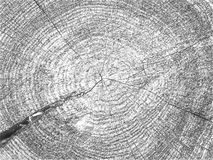 Árbol hermoso de Brown en un corte Fotografía de archivo libre de regalías