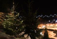 Árbol hermoso de la conífera con las luces de la Navidad que brillan intensamente en la calle, espacio para el texto imagenes de archivo