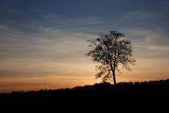Árbol hermoso de la silueta en la salida del sol Imagen de archivo libre de regalías