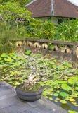 Árbol hermoso de los bonsais encendido imágenes de archivo libres de regalías