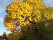 Árbol hermoso del otoño Imagen de archivo libre de regalías