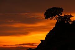 Árbol hermoso en la salida del sol Foto de archivo
