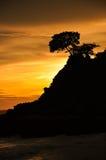 Árbol hermoso en la salida del sol Fotografía de archivo