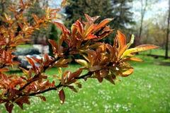 Árbol hermoso en un jardín de la primavera Fotografía de archivo