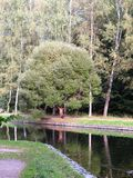 Árbol hermoso en un parque en la orilla de una charca Fotografía de archivo libre de regalías