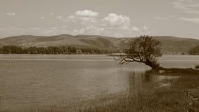 Árbol hermoso por el agua, sepia fotos de archivo
