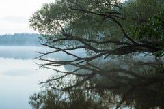 Árbol hermoso sobre el agua en niebla Foto de archivo libre de regalías