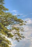 Árbol hermoso y nubes hechos por técnica del hdr Fotografía de archivo libre de regalías