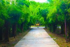 Árbol hermoso y túnel de bambú en los parques públicos fondo y papel pintado foto de archivo