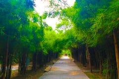Árbol hermoso y túnel de bambú en los parques públicos fondo y papel pintado fotos de archivo libres de regalías