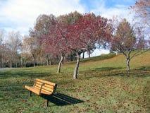 árbol hojeado rojo con el banco de parque Fotografía de archivo
