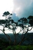 Árbol Honolulu Fotografía de archivo