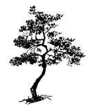 Árbol imperecedero seco viejo, ejemplo dibujado mano del vector del bosquejo Foto de archivo