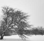Árbol impresionante del invierno que dobla abajo Imagen de archivo libre de regalías