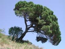 Árbol inclinado fotografía de archivo
