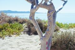 Árbol indígena Fotos de archivo libres de regalías