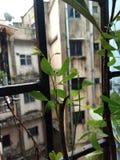 Árbol indio natural Fotos de archivo