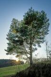 Árbol individual con los rayos de sol durante una puesta del sol Fotos de archivo