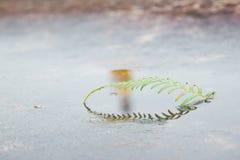 Árbol indomable Fotografía de archivo libre de regalías