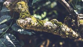 Árbol infectado hongo en un bosque foto de archivo