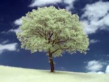 Árbol infrarrojo Foto de archivo libre de regalías