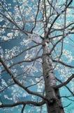 Árbol infrarrojo Fotos de archivo libres de regalías