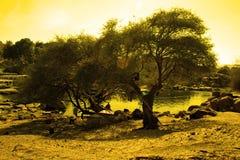 Árbol interesante de la iluminación Foto de archivo libre de regalías