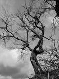 Árbol intrépido - un retrato de la naturaleza fotos de archivo