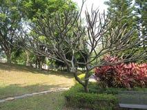 Árbol inusual en un parque del país Imágenes de archivo libres de regalías
