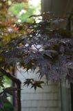 Árbol japonese del paisaje Foto de archivo