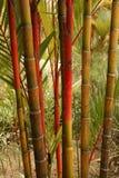 Árbol - jardines botánicos, Singapur Imagen de archivo