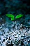 Árbol joven Foto de archivo libre de regalías