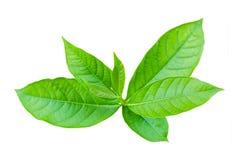 Árbol joven de la visión superior aislado Foto de archivo libre de regalías