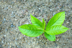 Árbol joven de la visión superior en la tierra Fotos de archivo