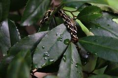 Árbol joven de las naturalezas Imagen de archivo libre de regalías