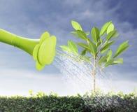 Árbol joven de riego Imagen de archivo libre de regalías