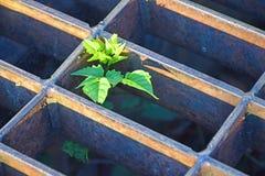 Árbol joven de Struggeling Fotos de archivo libres de regalías