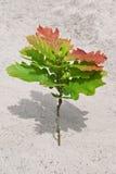 Árbol joven del roble Imágenes de archivo libres de regalías